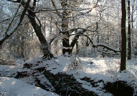 Rivington Winter, Spring Cottage Woods