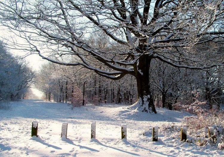 Rivington Tree 1, Winter