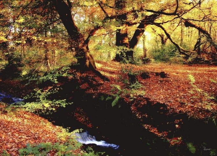 Hall Brook, Rivington by Margaret Ruaux