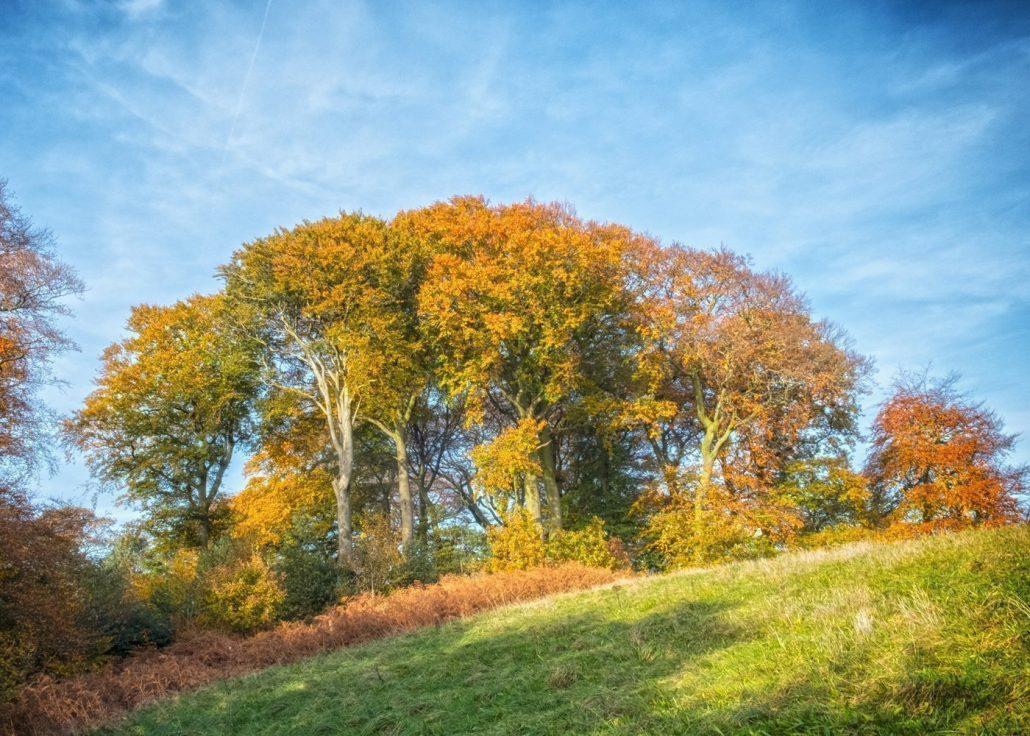 Autumn Trees Rivington 01 Autumn Trees Rivington 01