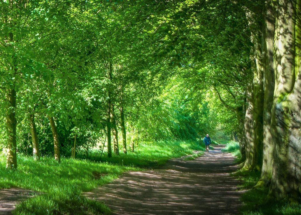 Walk From The Castle Ward Hill 1 Walk From The Castle Ward Hill 1