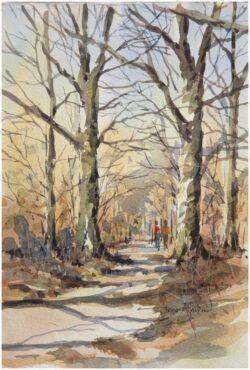 'Woodland Walk, Rivington'