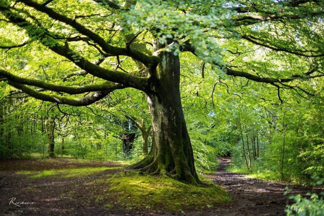 'Our Tree' by David Ruaux