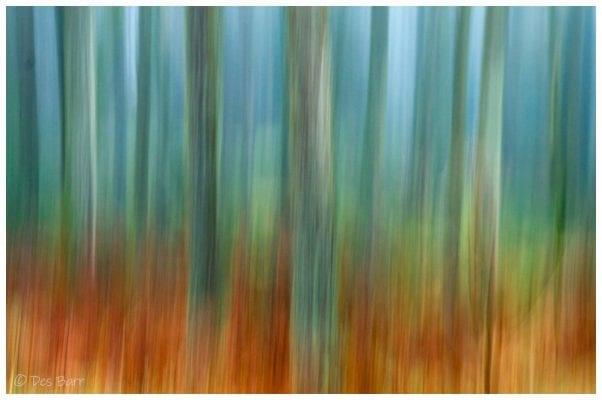 'Woodland Dream' by Des Barr