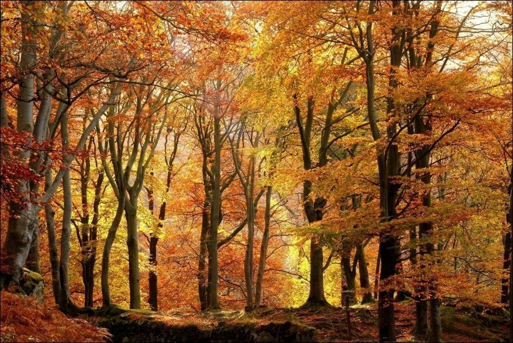 'Autumn Trees' by Des Barr