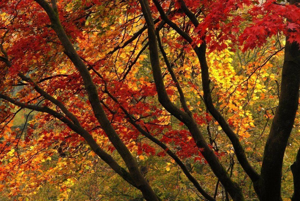 'Golden Colours' by Des Barr