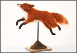 'A Fox Named Swift' by Jane Franklin