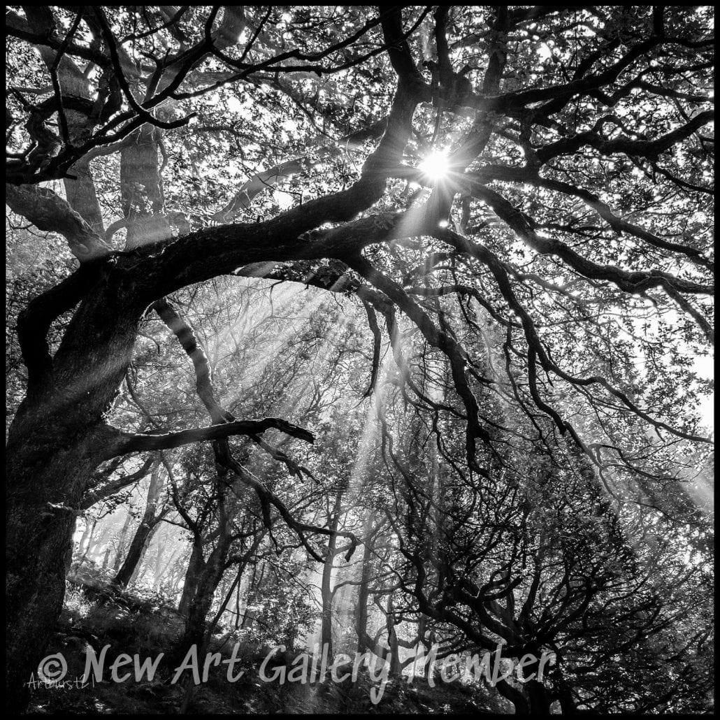 'Reach for the Sun' by David Ruaux