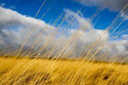 'Egerton Countryside' by Deborah Longworth