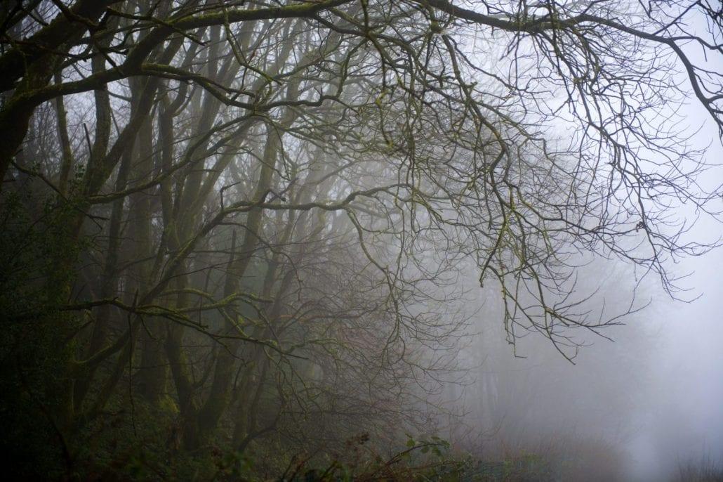 'The Fog' by Deborah Longworth