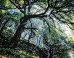 'Woodland Dream' by David Ruaux