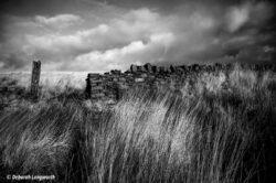 'Moorland Walk' by Deborah Longworth
