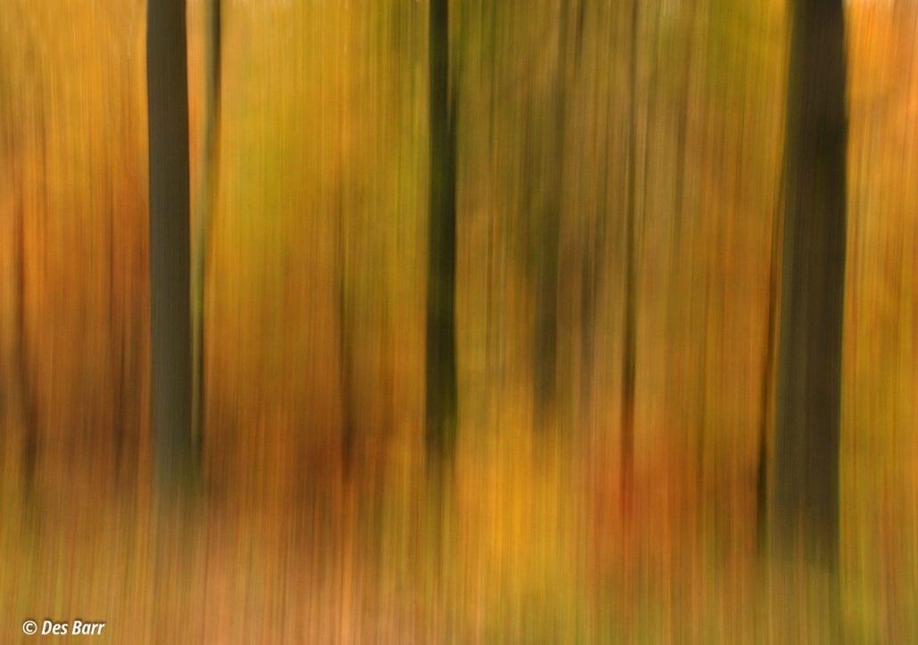'Autumn Glow' by Des Barr