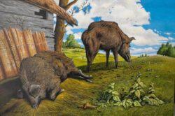 'Pigs' by Neil Baglow