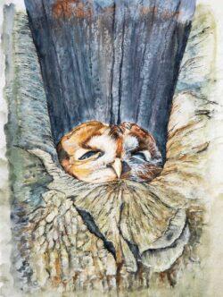 'The Sleepy Owl' by Helen Worthington