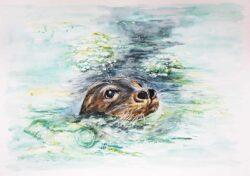 'Celia Seal' by Helen Worthington