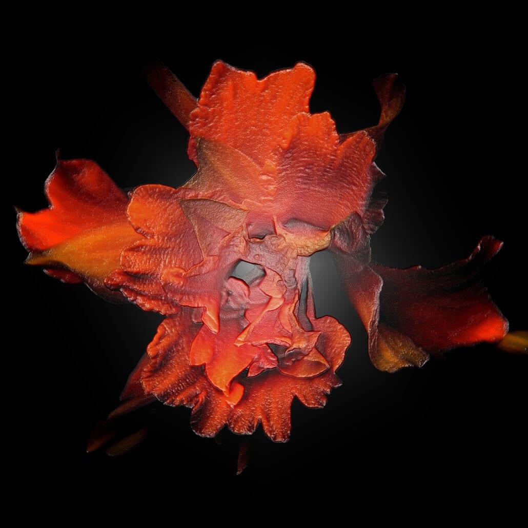 'Red Daffodil' by Deborah Longworth