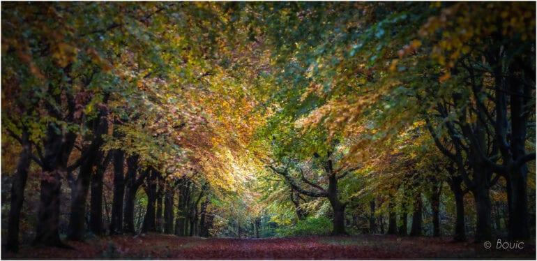 'Autumn Explosion, Rivington' by Bouic
