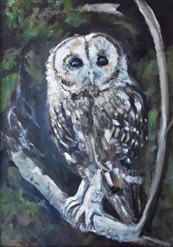'Tawny Owl' by Pamela Wakefield