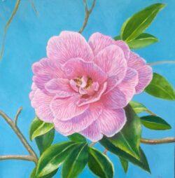 'Camelia' by Suzi Stephens