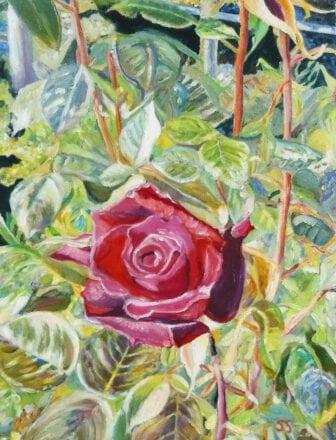 'Rose' by Suzi Stephens