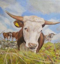 'Cow Portrait' by Suzi Stephens