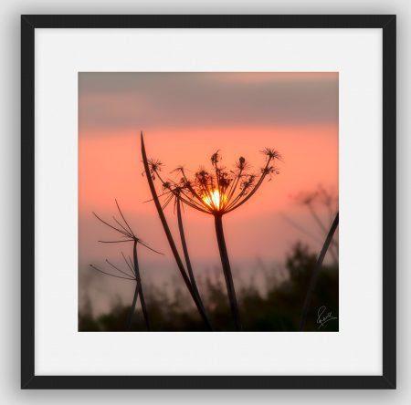 'Good Morning Sun' by David Ruaux